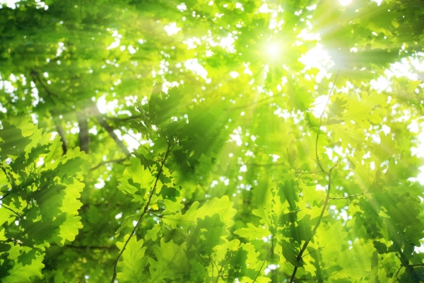 Plants reach for light, the giver of life.