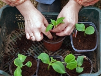 Increase the success of your seedlings with tips from RosebudMag.com.