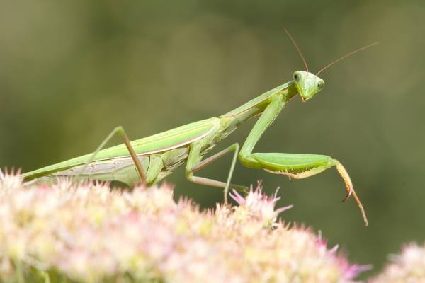 Some creatures, like the praying mantis, can be beneficial for your indoor garden.