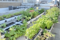 Rooftop gardens are an efficient method of urban gardening.