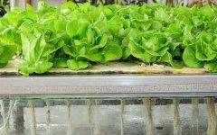 Aeroponics hydroponics gardening is a good option for serious high-value growers.