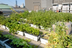 This rooftop garden is an example of the type of urban growing that could save Detroit.