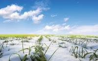 How will global warming affect outdoor growers?